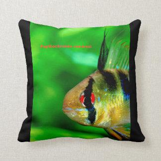 Ram Cichlid , Papiliochromis ramirezi Kissen