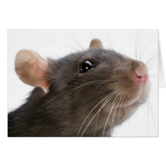Ratten!!! Grußkarte