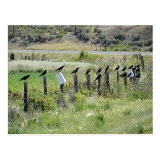 Ravins, die auf Zaun sitzen Postkarte