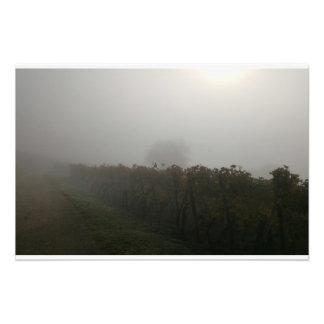 Reben im Nebel Fotodruck