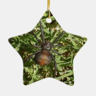 Redback-Spinne auf grünem Gras, Keramik Stern-Ornament