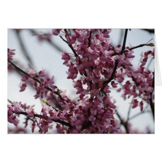Redbud Blüten, die Frühling sich freuen Karte