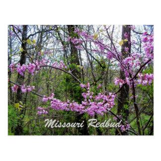 Redbud Missouri Postkarte