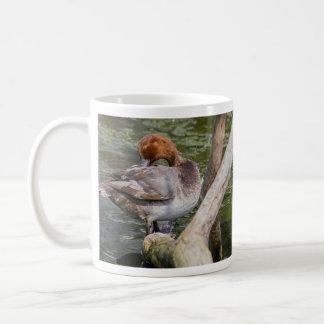 Redhead-Ente Kaffeetasse