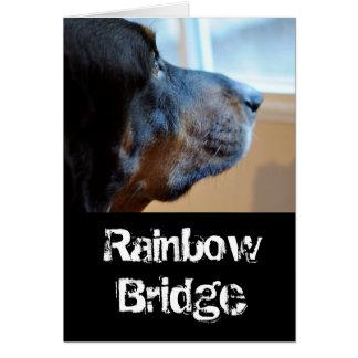 Regenbogen-Brückenwaschbärjagdhund Karte