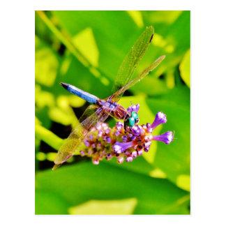 Regenbogen färbte Libelle auf einer lila rosa Postkarte