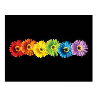 Regenbogen-Gänseblümchen Postkarte