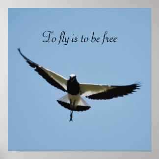 Regenpfeifervogel im Flug Poster