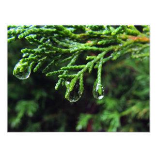Regentropfen auf einem Baumast (#2) Kunstfotos