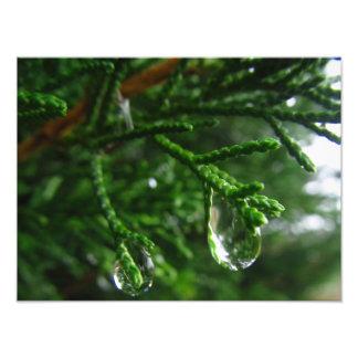 Regentropfen auf einem Baumast Fotodruck