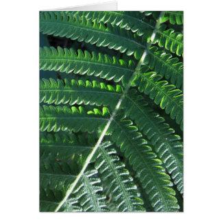 Regenwald-Farn Karte