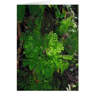 Regenwald-Farne Karte