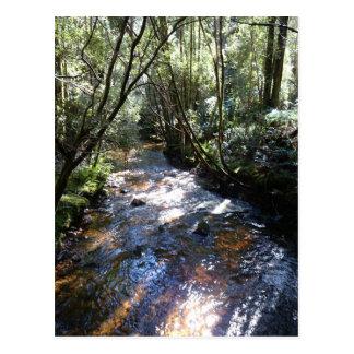 Regenwald-Strom Postkarte