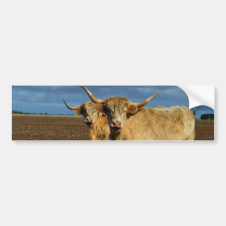 Rehbraune Hochland-Kühe, Autoaufkleber