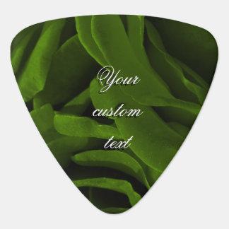 Reiches Rosen-Blumen-Foto des olivgrünen Grüns Plektron