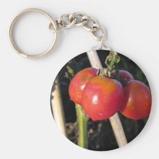 Reife Tomaten auf einer Niederlassung Schlüsselanhänger