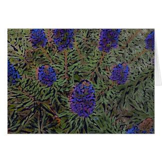 Reihen der lila Kalifornien-Lavendel-Pflanze Del Karte