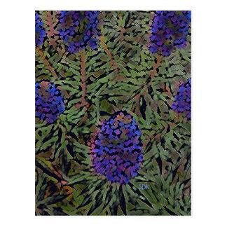 Reihen der lila Kalifornien-Lavendel-Pflanze Del Postkarte