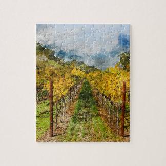 Reihen der Weinstöcke in Napa Valley Kalifornien