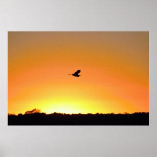 Reiher-Fliegen am Sonnenuntergang-Foto Poster