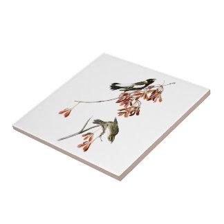 Reis-Vogel-John James Audubon-Vögel von Amerika Kleine Quadratische Fliese
