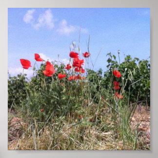 Reizendes Plakat der roten Mohnblumen und der