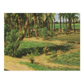 Replik Vintages Ägypten, Nildelta Landwirtschaft Postkarte