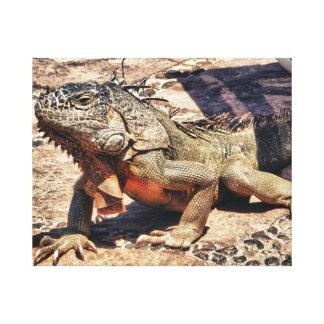 Reptil in Mexiko Leinwanddruck