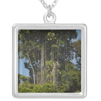 Rewa Fluss-Rand Regenwald Guyana Versilberte Kette