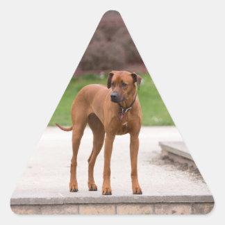 Rhodesian Ridgeback Hundeschönes Foto, Geschenk Dreiecks-Aufkleber
