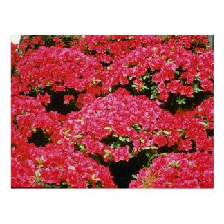 Rhododendron-Azaleen-Blumen Postkarte