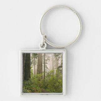 Rhododendron, der blüht unter den Küsten-Rothölzer Silberfarbener Quadratischer Schlüsselanhänger