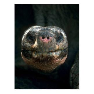 Riesige kuppelförmige Schildkröte Postkarte