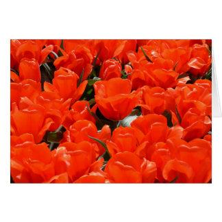 Riesige orange Tulpen Karte