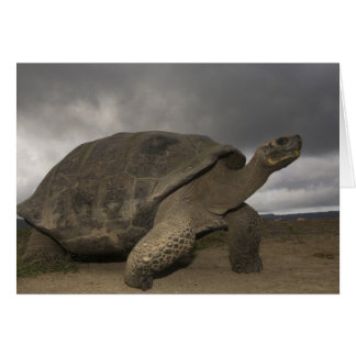 Riesige SchildkröteGeochelone Galapagos Karte