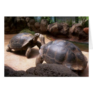 Riesiger Schildkröte-Kuss Karte