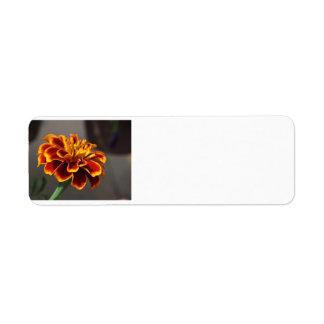 Ringelblume Rückversand-Adressaufkleber
