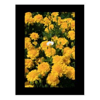 Ringelblumen-Blumen und eine Postkarte