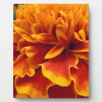 Ringelblumen-Blumenblätter Fotoplatte