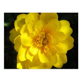 Ringelblumen-goldenes Gelb Postkarten