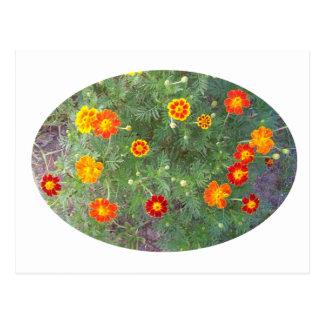 Ringelblumen-Melodie Postkarte