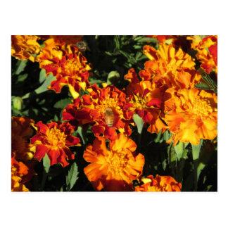 Ringelblumen mit einer Bienen-Postkarte Postkarte