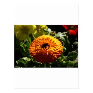 Ringelblumen Postkarte