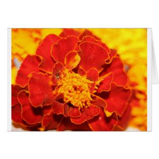 Ringelblumen rot grußkarte