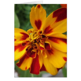 Ringelblumen-zweifarbiges gelbes Rot Grußkarte
