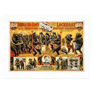 Ringling Bros Pachyderms 1899 Vintage Elefanten Postkarte