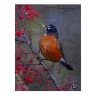 Robin-Rot-Brust Postkarte