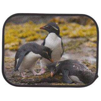 Rockhopper Pinguine verständigen sich mit einander Autofußmatte