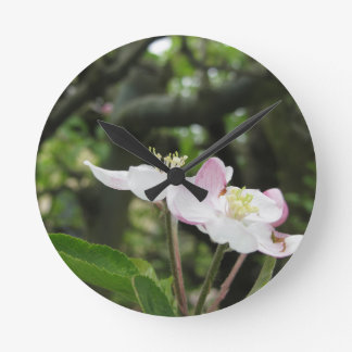 Rosa Apfel-Blume im Frühling. Toskana, Italien Runde Wanduhr
