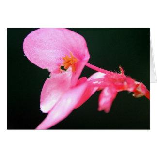 Rosa Begonien-Blüte Karte